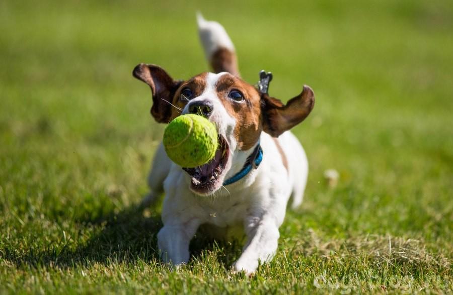 как похудеть собаке - играйте в мяч
