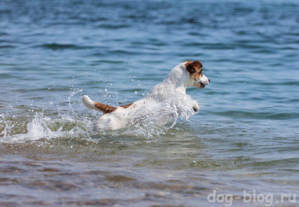 как похудеть собаке - плавать