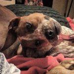 Фото собаки, которое сломало людям мозг!