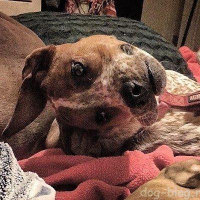 фото собаки иллюзия