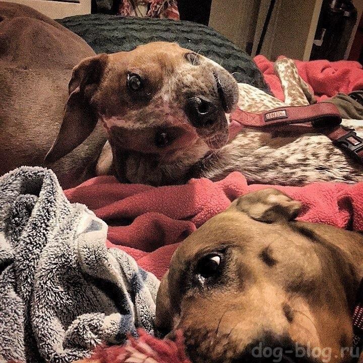 оптическая иллюзия на фото собаки