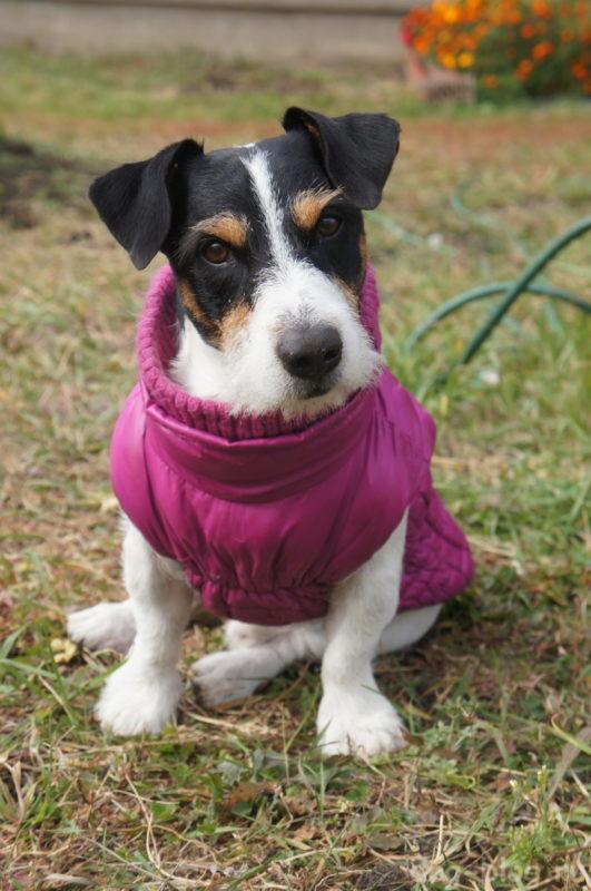 одежда для собак из детской одежды