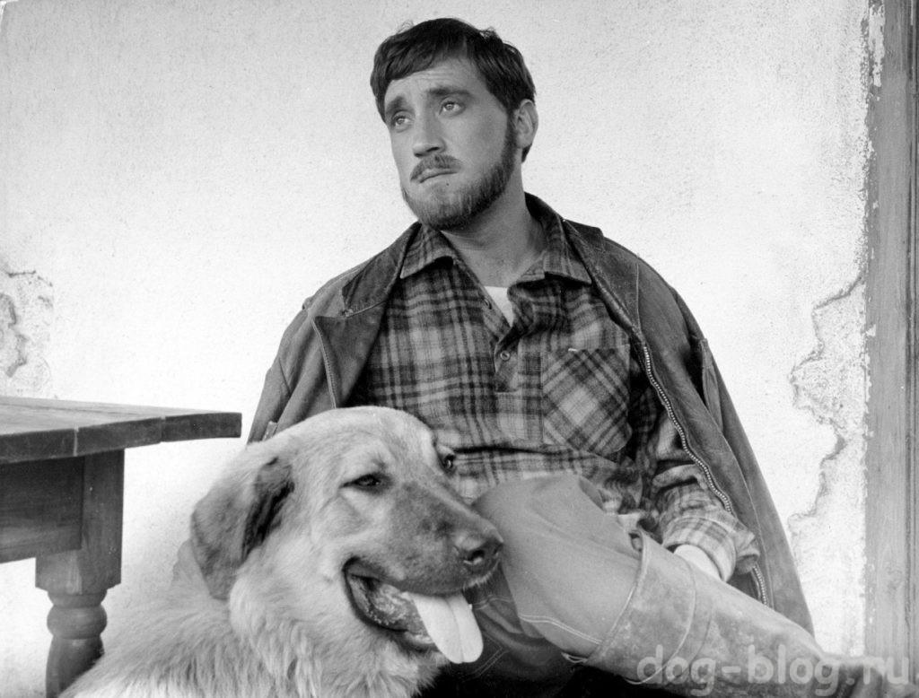 собаки и Высоцкий