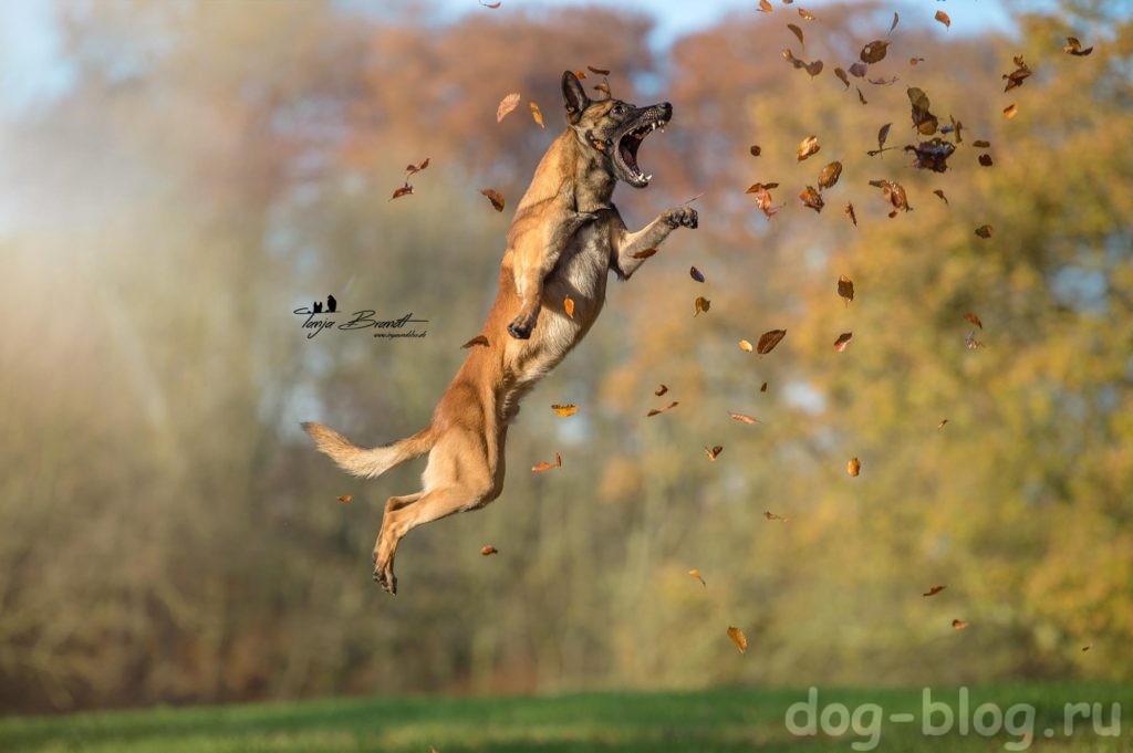 каждой собаке нужна дрессировка