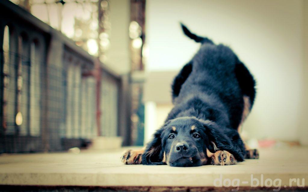 Дрессировка щенка самостоятельно