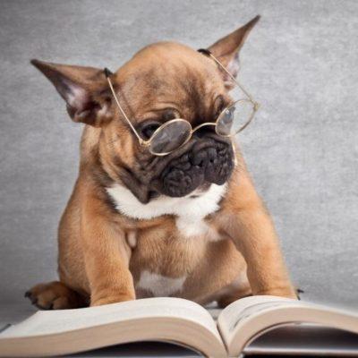 умные высказывания о собаках