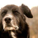 15 секретов молодости вашей собаки