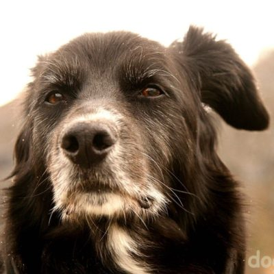 что делать собака стареет