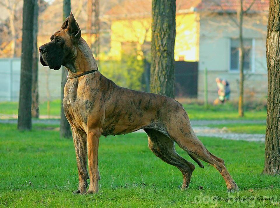 порода собаки и характер хозяина