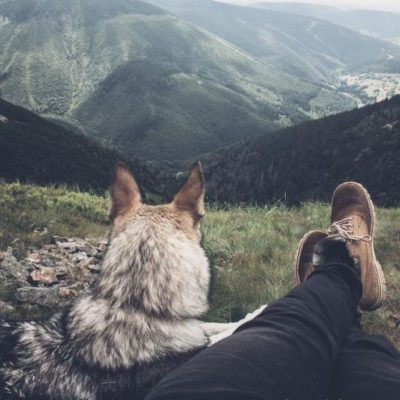 крылатые фразы о собаках