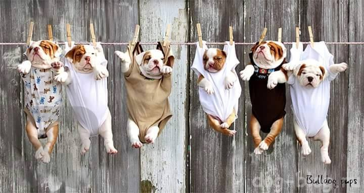 домашняя дрессировка щенка