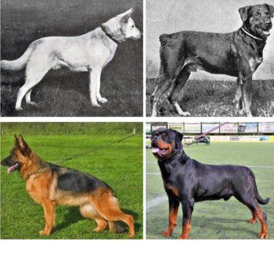 изменения пород собак
