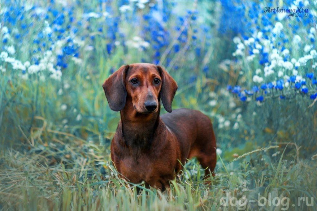 характер хозяина по породе собаки