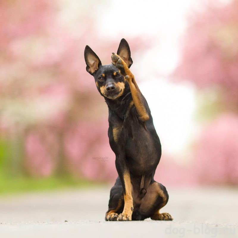 характер хозяина исходя из породы его собаки