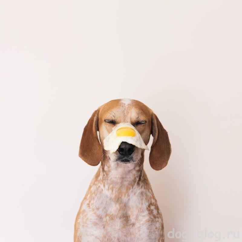 болезни собак симптомы фото