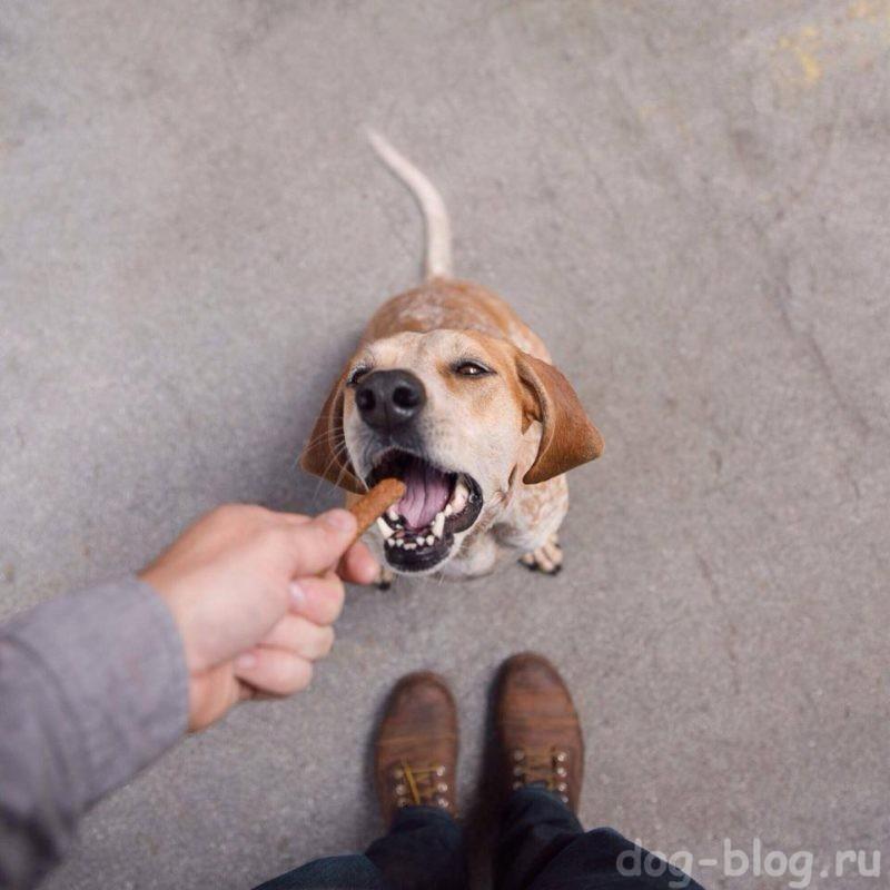 болезни собак по симптомам