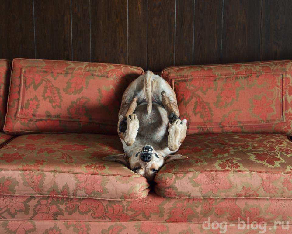 болезни собак по симптомам фото