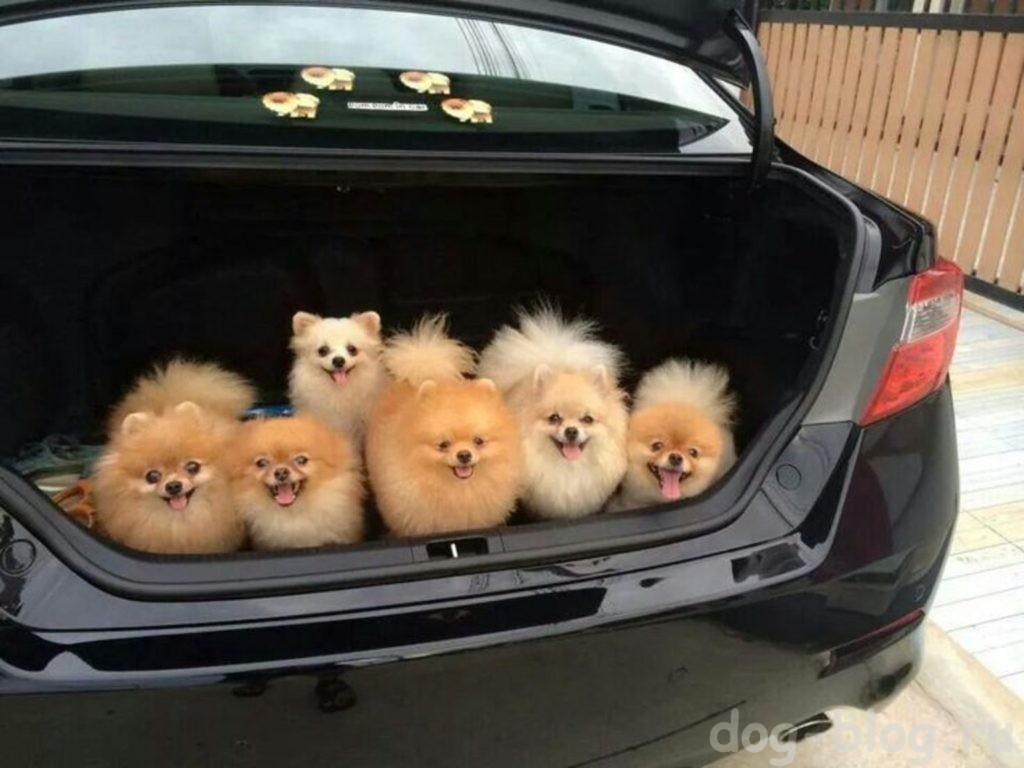 какую породу собаки подарить