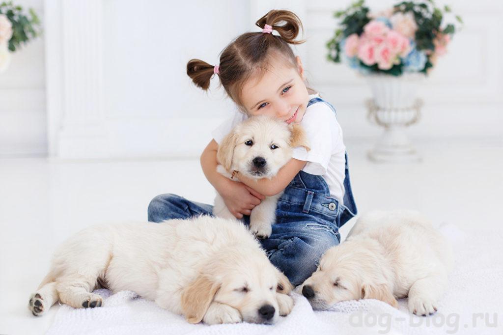 какую собаку подарить девочке