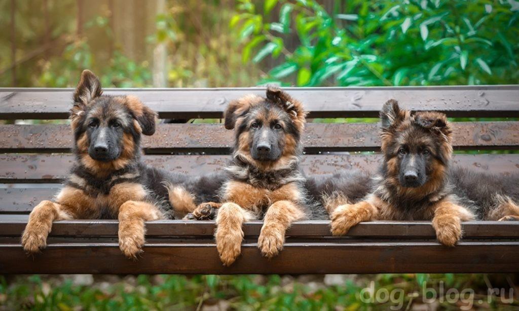 фильмы о собаках