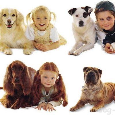 Какую собаку подарить ребёнку