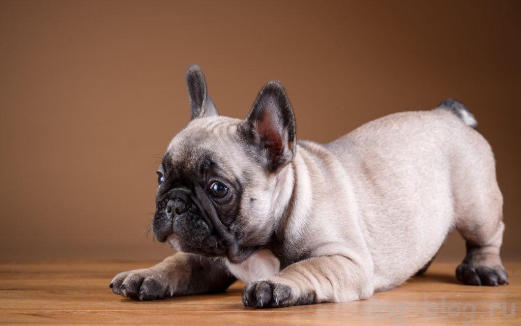 важность социализации щенка