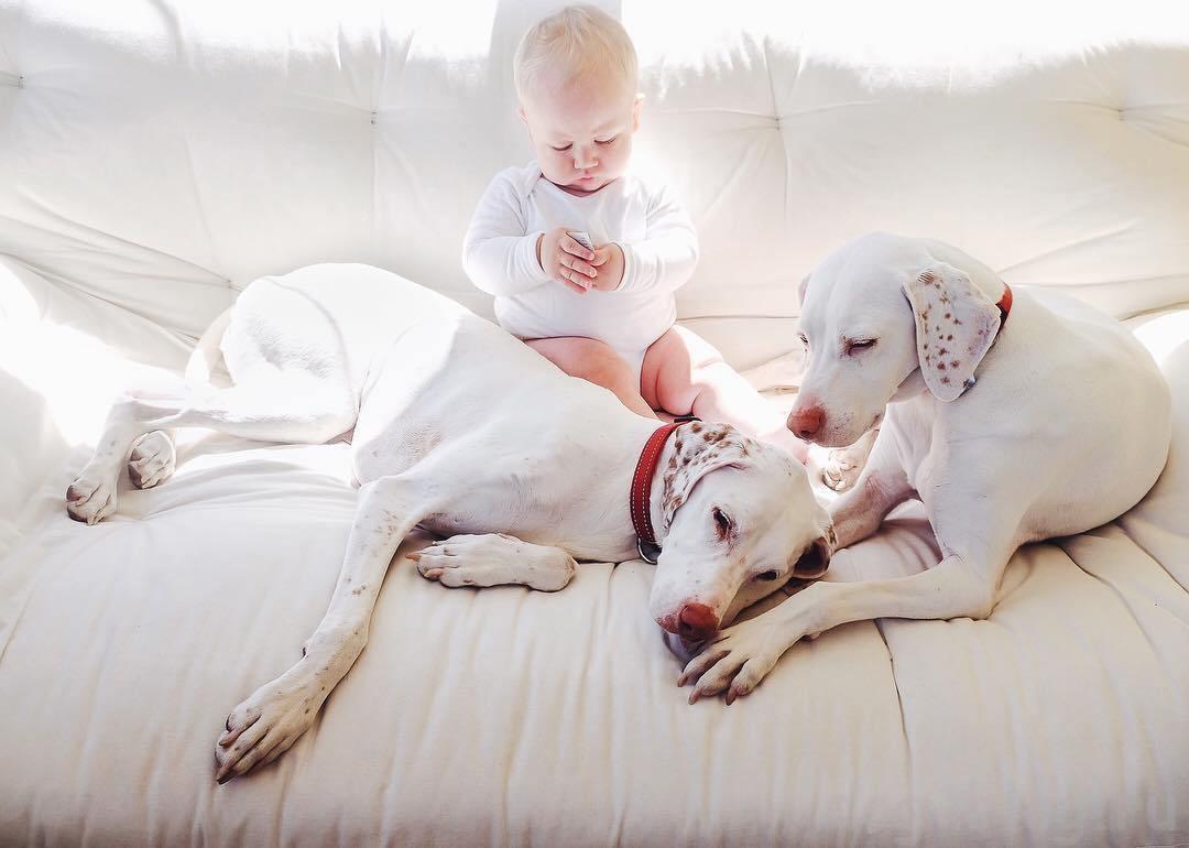 Как подготовить собаку к появлению ребёнка