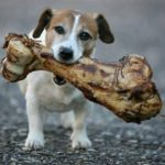 Какие кости можно давать собакам