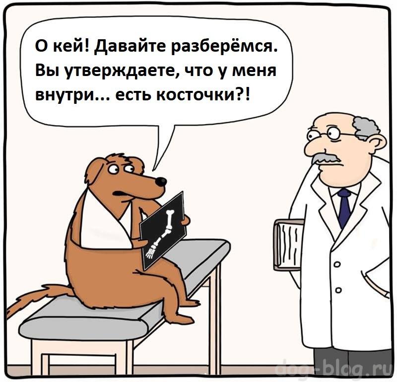 давать ли собаке кости