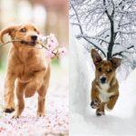 Весна: ожидание и реальность