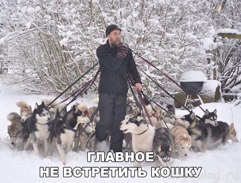в защиту собак