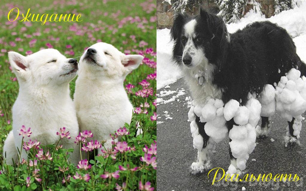 весна - ожидание и реальность