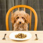Какой сухой корм для собак лучше?