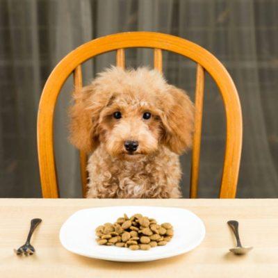 смешанное питание для собак