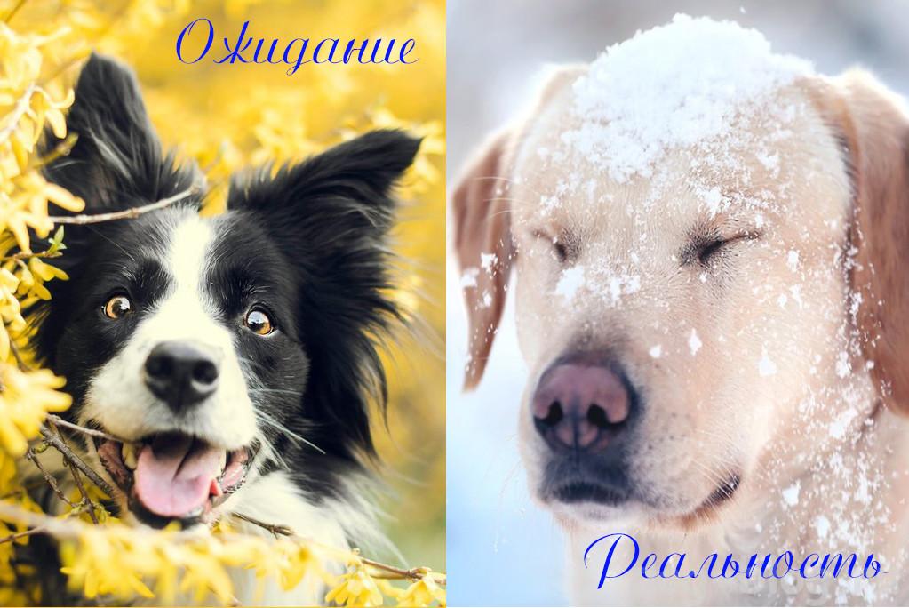 собаки и весна