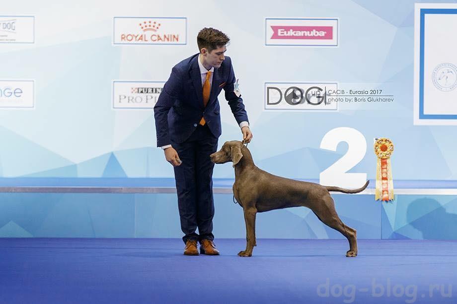 хендлер собак