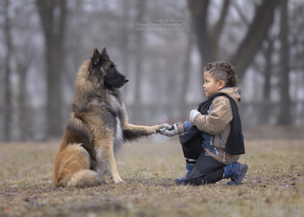 дети и большие собаки