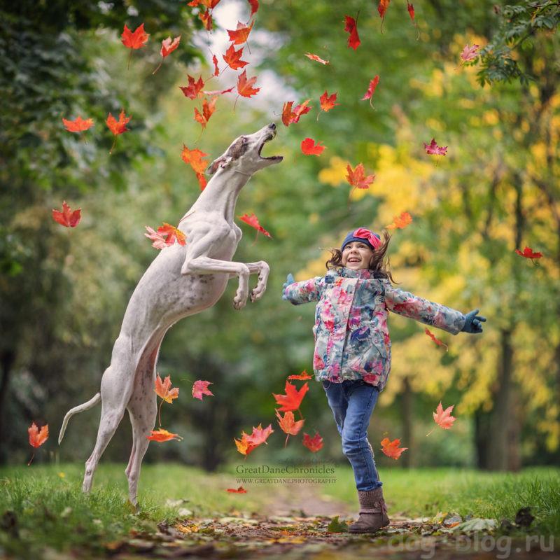 собаки для детей породы название с фото