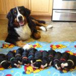 Ошейники для новорожденных щенков