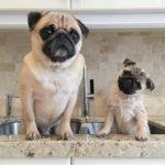 Социализация щенка