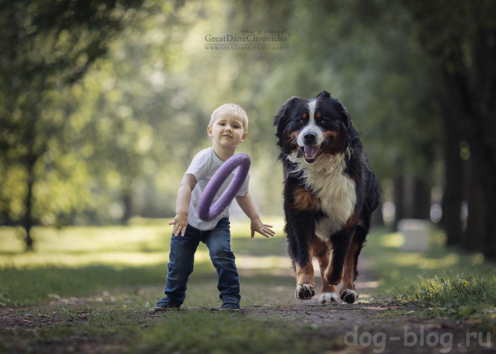 собаки для детей породы фото