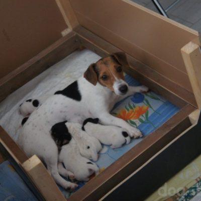 место для родов собаки своими руками