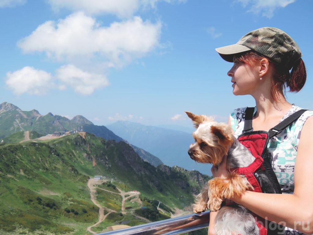 в Европу с собакой