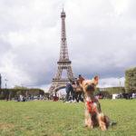 5 причин взять собаку в путешествие по Европе