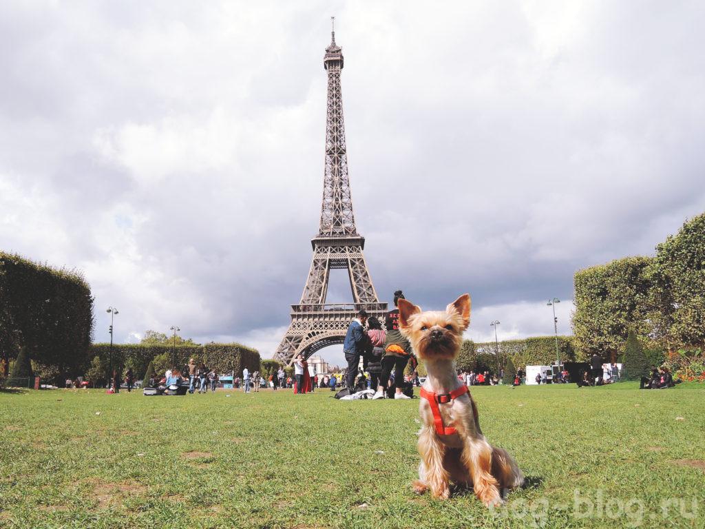 с собакой по Европе