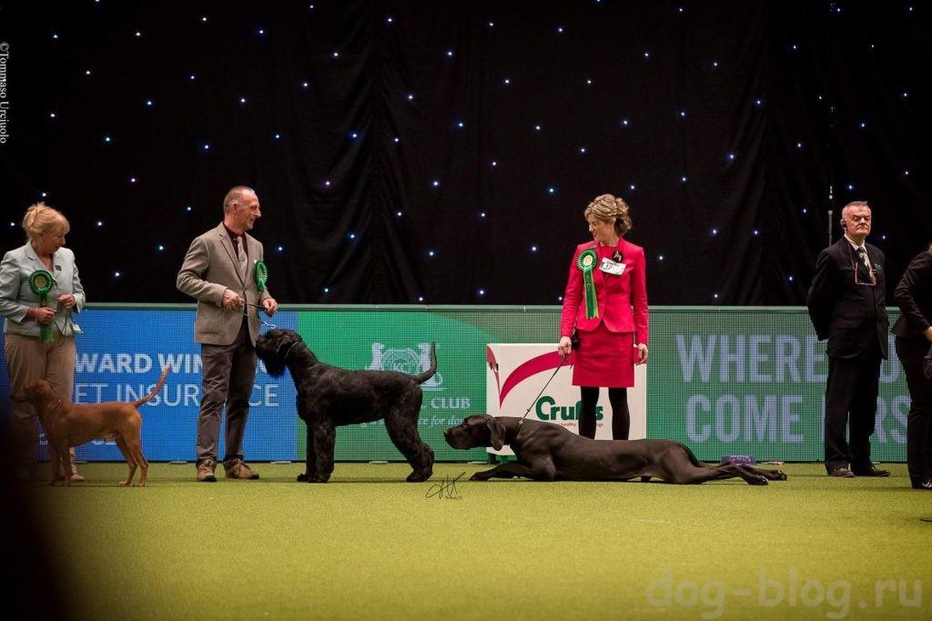 недопустимое поведение собаки на выставке