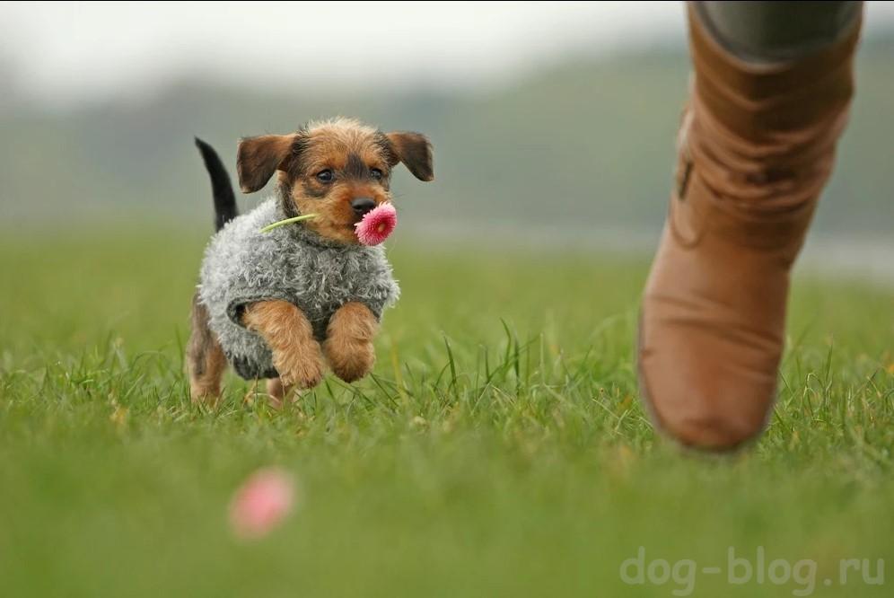 как социализировать собаку