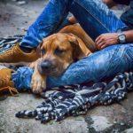 13 причин, почему собака лучше жены