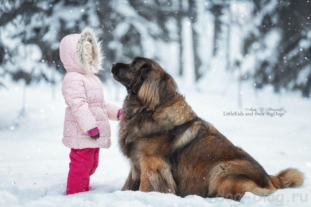 собака для детей породы фото