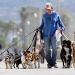 Антисобачникам посвящается! Аргументы в защиту собак и их хозяев